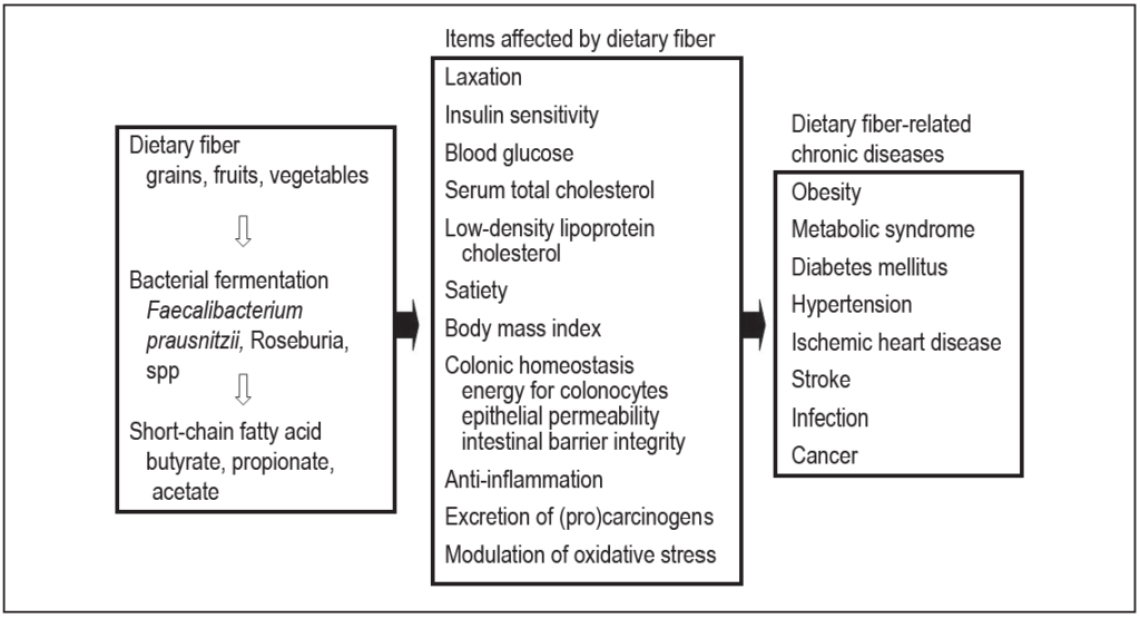 Dietary fiber and its effect on and relationship to chronic diseases
